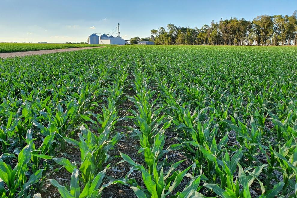 Startup de Río Cuarto se lanza al mercado agrícola de EE.UU.
